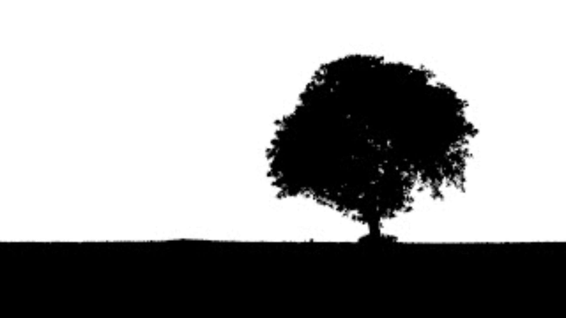 cropped-tree-894917_1920.jpg