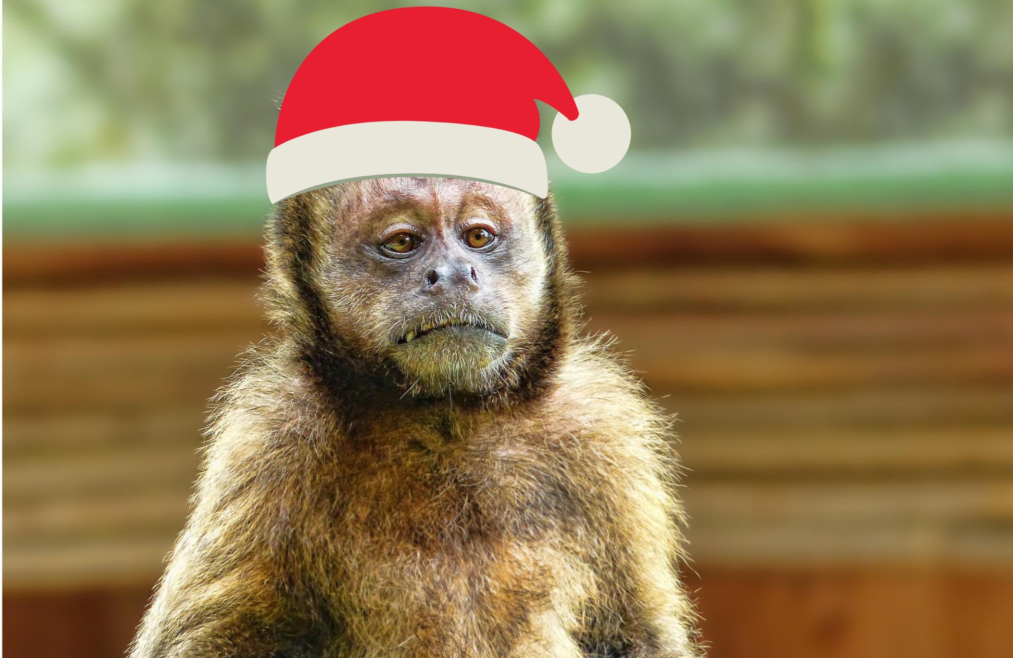 Idą Święta – nie bądź koczkodanem tradycji