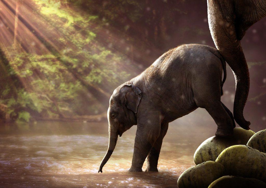 Przygody słonika o dobrym sercu